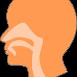 鼻の奥が乾燥する原因は?効果的な3つの対処法